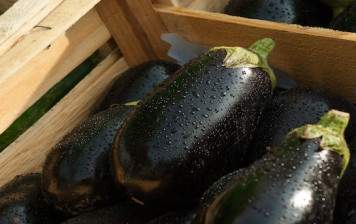 Organic eggplants from Geneva GRTA