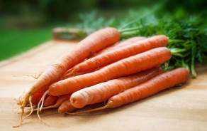 Organic Carrots from Geneva