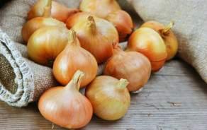 Onions (Swiss, Vaud)