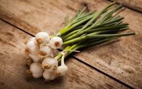 Spring onion (Swiss, Vaud)