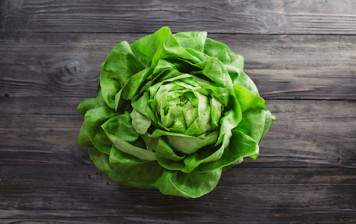 Organic oak leaf lettuce from Geneva