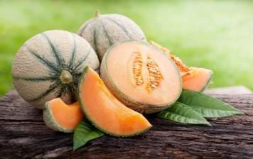 Charentais Melon (France)