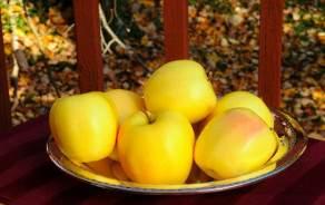 Le Cubi Jus de Pomme Golden GRTA