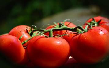 Grape Tomatoes