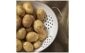 Pommes de terre BIO Suisse Charlotte lot(s)  500 Gr