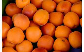 Abricot du Valais